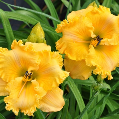 You are invited to Breakfast in the Garden
